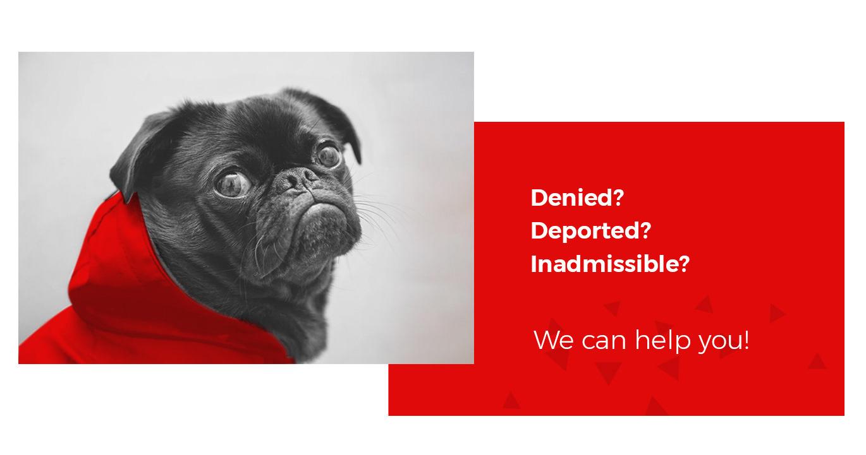 nayyar immigration web designs